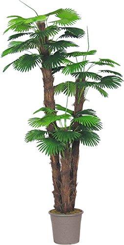 Palm Camerus synthétique Extra Large-3-troncs H.168/240/300 cm