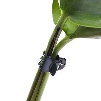 Outus 100 Pack Orchidee Clips Pflanze Orchidee Stützclips, Dunkelgrün von Outus - Du und dein Garten