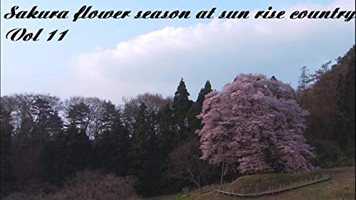 Sakura flower season at sun rise country Vol 11: Natural in japan (English Edition) Sakura Natural