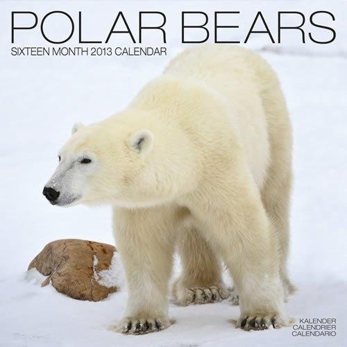 Polar Bears 2013 por Avonside Publishing