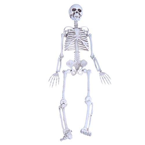 kofun-Tricky Gag Spielzeug Relax Spielzeug Menschlicher Schädel Skelett Medium Totenkopf Full Body Anatomisches Modell