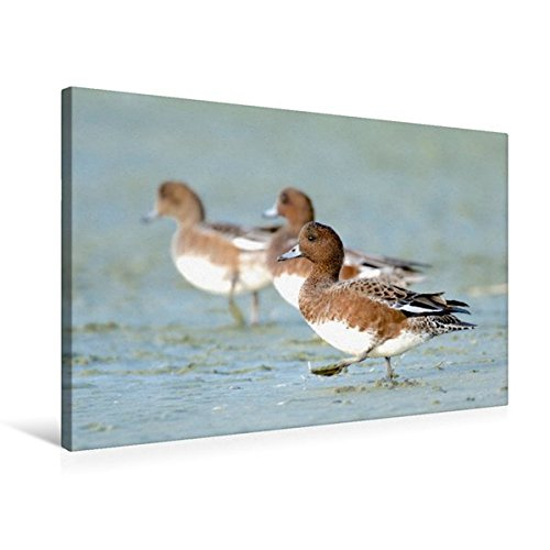 Portada del libro Premium Textil de lienzo 45cm x 30cm pfeifente Horizontal, 75x50 cm