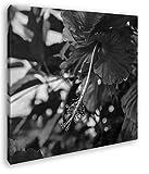 deyoli schöner Roter Hibiskus Format: 60x60 Effekt: Schwarz&Weiß als Leinwandbild, Motiv auf Echtholzrahmen, Hochwertiger Digitaldruck mit Rahmen, Kein Poster oder Plakat