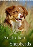 Australian Shepherds (Wandkalender 2020 DIN A3 hoch): 13 wunderschöne Australian Shepherd Motive für das ganze Jahr (Monatskalender, 14 Seiten ) (CALVENDO Tiere)
