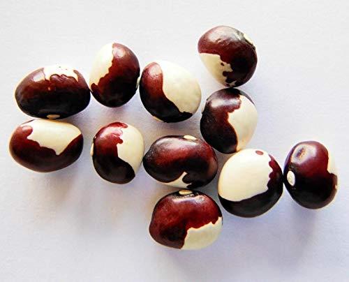 Portal Cool Ã'gyptische Pea Bean Alte Kletterbohne Schwere Cropper Verwenden Frische Getrocknete + 20 Samen