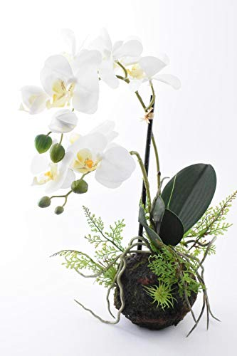 Orchideen-Arrangement Gewicht