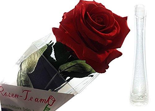 Rosen-te-amo Das Geschenk zum Valentinstag - Konservierte Rose (56 cm, Rot Inkl. Sandra Rich Solifleur-Glasvase) Vase Geschenke für Freundin
