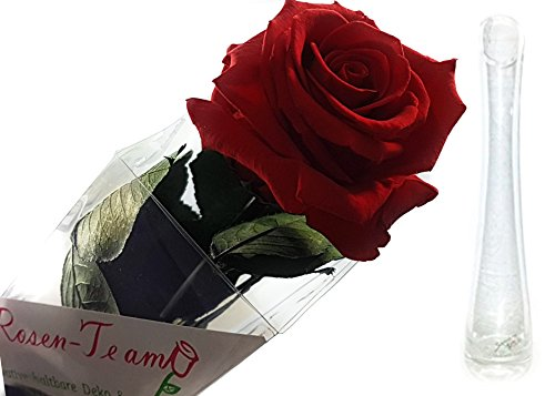 Rosen-te-amo Konservierte Rose mit Grußkarte (56 cm, Rot Inkl. Sandra Rich Solifleur-Glasvase) Vase mit Blume