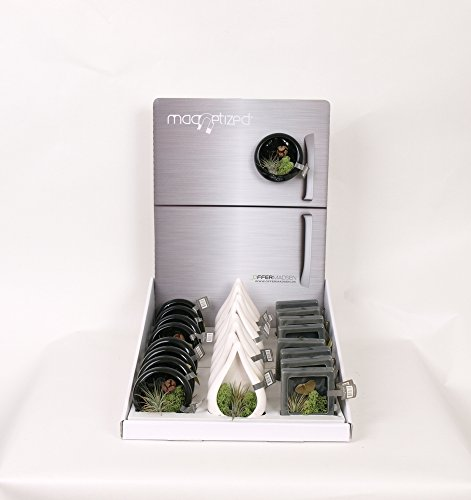 moderrn-magnetic-air-plant-gift-send-your-love-to-someone-special-easy-care-plant-thats-hard-to-kill
