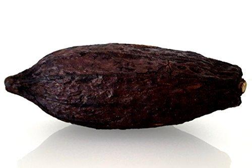 1 Stück Riesenschote XXL Kakaoschote ca. 25 x 12 cm Kakaofrucht Kakaobohne Riesenfrucht Kakao, getrocknet, frisch getrocknet, naturgetrocknet, man hört tlw. die Kakaofrüchte im Inneren klappern, Früchte verströmen einen leichten Schokoladenduft, Farbe: Schokoladenbraun, braun, Deko, Dekofrüchte, fermentiert und getrocknet, Duft: leicht nach Schokolade