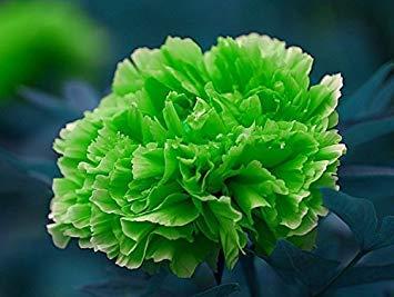 10pcs / sac de graines de pivoine, jaune, pivoines graines de fleurs rose chinoise belles graines de bonsaï plantes en pot pour le jardin de la maison 2