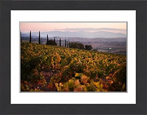 Framed Print of Vineyards in the Montalcino wine region near Castello Banfi, Tuscany