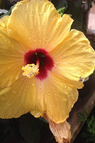 Yellow Hibiscus Flower Notebook: This beautiful sunshine yellow journal is the perfect  accompaniment for lovers of this color. Great size to take ... jot down your ideas and lists for daily use.