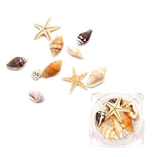 Upxiang Nageldekoration Sea Shell 1 Box Nail Art Strass Glitter Diamant Edelsteine 3D Tipps DIY Dekoration (Klar) -