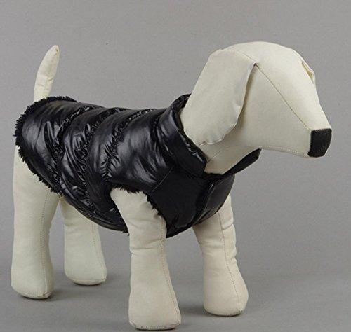 Vestitini, Giubbottini, Abbigliamento per cani Chihuahua