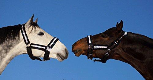 Meister Comfort Headcollar for Nobility, Travel, Stable Horse Headcollar Halter 8