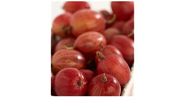 Aimado Seeds Garden-50 Pcs Groseilliers /à maquereaux graine fruit Riches en vitamine rustique plants vivaces pour terrasse et balcon