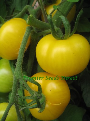 premier-seeds-direct-tomato-golden-sunburst-includes-100-seeds