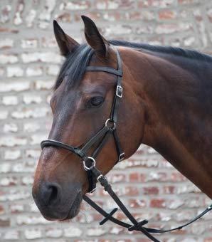 Waldhausen Linda Tellington Jones Lindel, schwarz, Pony