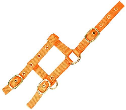 EKKIA Verstellbares Mini Halfter orange Mini-Fohlengröße