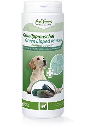 AniForte Grünlippmuschel-Kapseln 300 Stück für Hunde - reicht für 300 Tage max, Gelenk-Tabletten, Reines Grünlippmuschel-Extrakt Perna Canaliculus, Grünlippenmuschel