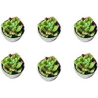 VORCOOL 6pcs Velas de Planta Suculentas Velas para la Fiesta y Eventos Sorpresos (Estilo C)