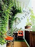 VISTARIC Als Erscheinen im Bild: 200pcs Sonder Gras Samen Specialized Rasensamen Evergreen Stauden Echte Pflanzen Abdeckung und Verschönern Bodenfreiheit * Haustier Liebe
