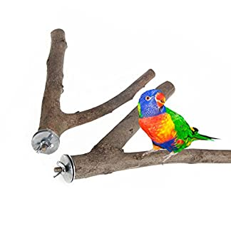 Dairyshop 1Pc Parrot Raw Wood Fork Stand Rack Toy Hamster Branch Perches For Pet Bird Cage 41N23ycrVfL