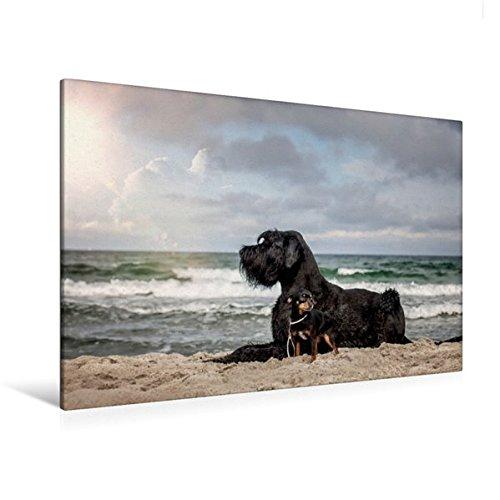 Premium Textil-Leinwand 120 cm x 80 cm quer, Hunde am Meer | Wandbild, Bild auf Keilrahmen, Fertigbild auf echter Leinwand, Leinwanddruck: Tierische Freundschaft (CALVENDO Tiere) (Beschützer Planer)