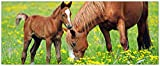 Wallario selbstklebendes XXL Poster - Pferde auf der Koppel in Premiumqualität, Größe: 80 x 200 cm