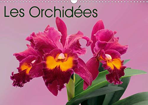 Les Orchidées (Calendrier mural 2020 DIN A3 horizontal)