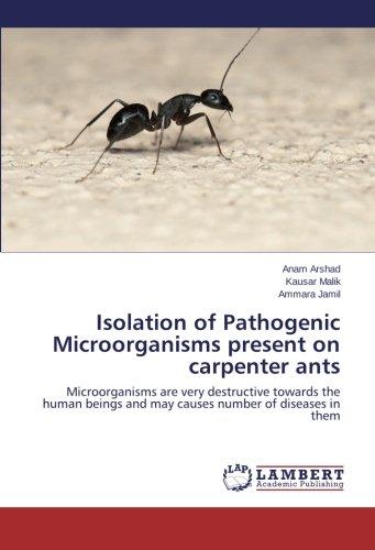 isolation-of-pathogenic-microorganisms-present-on-carpenter-ants-microorganisms-are-very-destructive