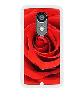 ifasho Designer Back Case Cover for Motorola Moto X :: Motorola Moto X (1st Gen) XT1052 XT1058 XT1053 XT1056 XT1060 XT1055 (Economise Rose Flower Gold Rose 24K Zinnia)