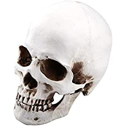 1: 1 Modelo de Cabeza de Tamaño de La Vida Modelo de Cráneo de Resina Desmontable Cráneo de Anatomía para Enseñanza Médica Calavera de Resina de Decoración de Halloween