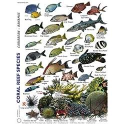 Plaquette Plongée Stab en Anglais les Habitants du Recif Corallien