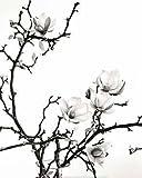 Unbekannt Poster 40x 50cm Zweig Magnolie/Branch of Magnolia/Magnolienzweig Henry Wilson
