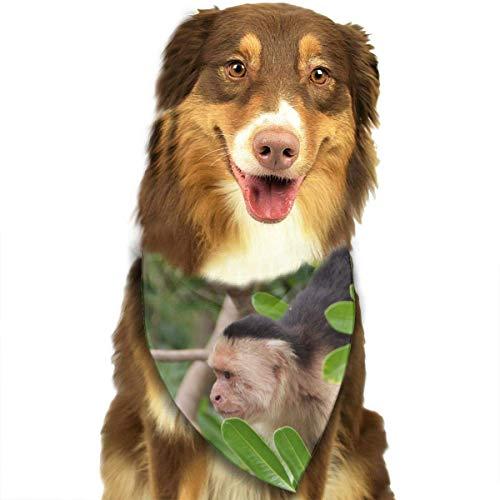 Sdltkhy Monkey Fashion Dog Bandana Haustierzubehör Easy Wash Scarf