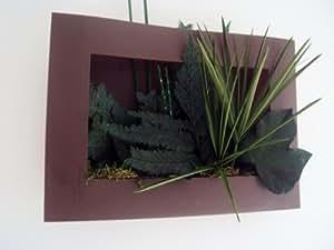 TABLEAU VEGETAL PAPYRUS LIERRE MOUSSE 35x25cm plantes naturelles stabilisées