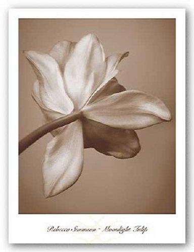 Moonlight Tulip von Rebecca Swanson Kunstdruck
