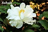 Mischen Sie Fleißiges Lieschen Seeds 50 PC Busy Lizzie Balsam Perennial Blumensamen Bonsai Sultana So Beautiful Light Up Your Garden 8
