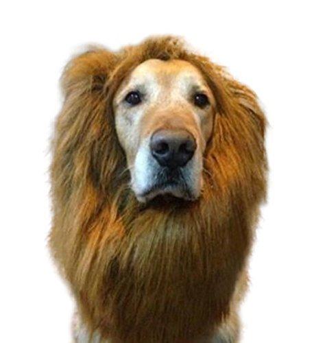 White Dog Kostüm Lion - LARGE DOG LION MANE WIG HAIR CLOTHES COSTUME FUNNY FAUX FUR - UK SELLER