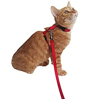 Adjustable Nylon Cat Harness with Leash Puppy Pet Harness Strap Collar Lead Leash Traction Safety Rope (Red) 7