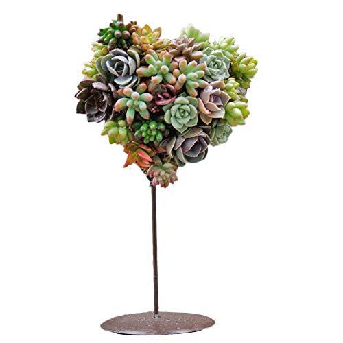 Pot de Fleur en Fer Forgé pour Plante Succulentes Artificielles, Plateau en Forme de Coeur pour Support de Romantique Miniature Arbre Plante Cactus(Sans Plantes)