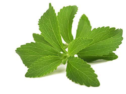 Stevia/env. 100 graines/sucre/de rechange pour jardin ou pour semis en pot à herbes aromatiques