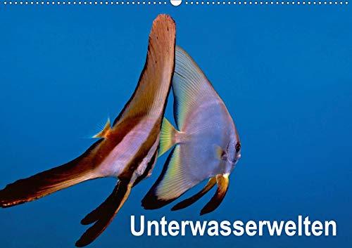 Unterwasserwelten (Wandkalender 2021 DIN A2 quer): Unterwasseraufnahmen von Meerestieren im Mittelmeer, Roten Meer und Indischen Ozean.. (Monatskalender, 14 Seiten ) (CALVENDO Tiere)