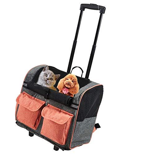 Viaggiare con Il nostro Chihuahua, guida e consigli. Guide e Consigli per Chihuahua Informazioni