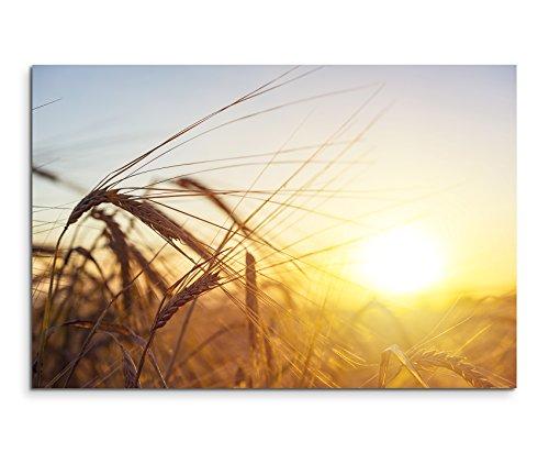 Leinwandbild Naturfotografie – Weizenfeld bei Sonnenaufgang auf Leinwand exklusives Wandbild moderne Fotografie für ihre Wand in vielen Größen
