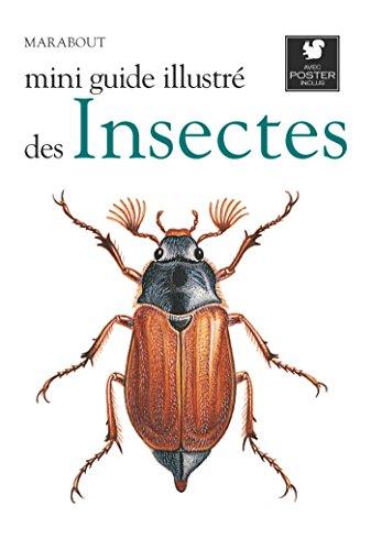 Mini guide illustré des insectes