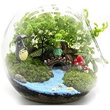 Amazon Fr Terrarium Plante