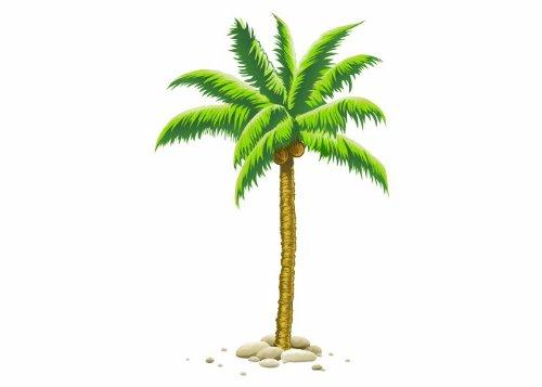Wandtattooladen Wandsticker - Kokos-Palme Größe: 51x80cm